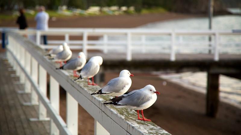 Russell Beach