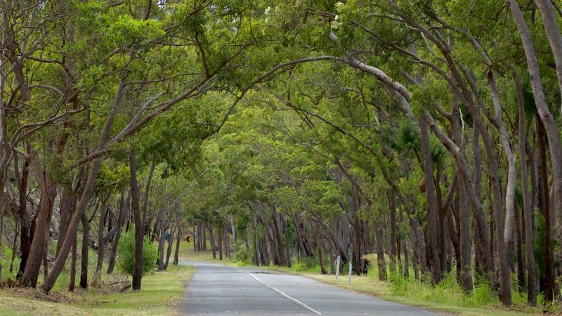 Capricorn dates in Australia
