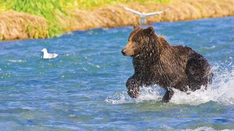 ŋ�物 Â�ウスウエスト Â�ラスカの写真・画像|エクスペディア