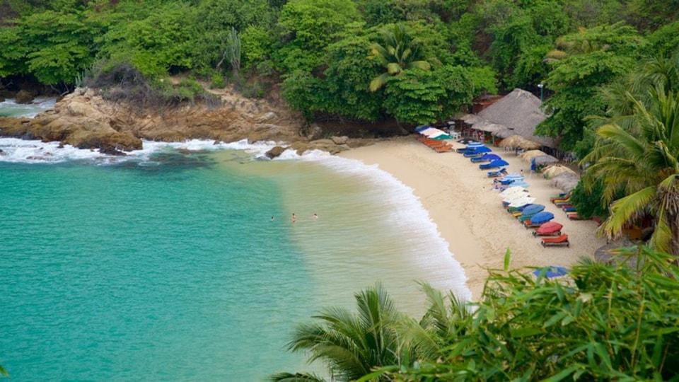 Carrizalillo Beach which includes tropical scenes, rocky coastline and general coastal views