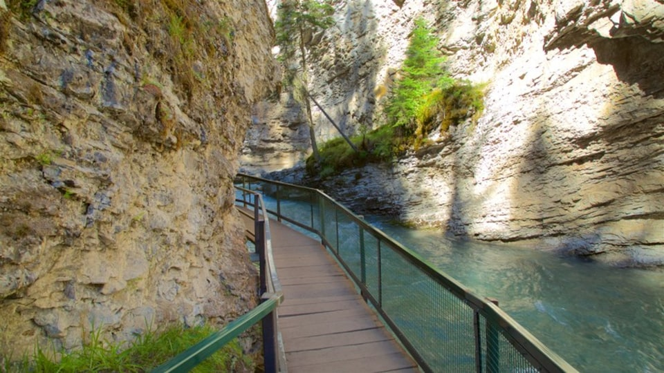 Johnston Canyon which includes a gorge or canyon and a river or creek