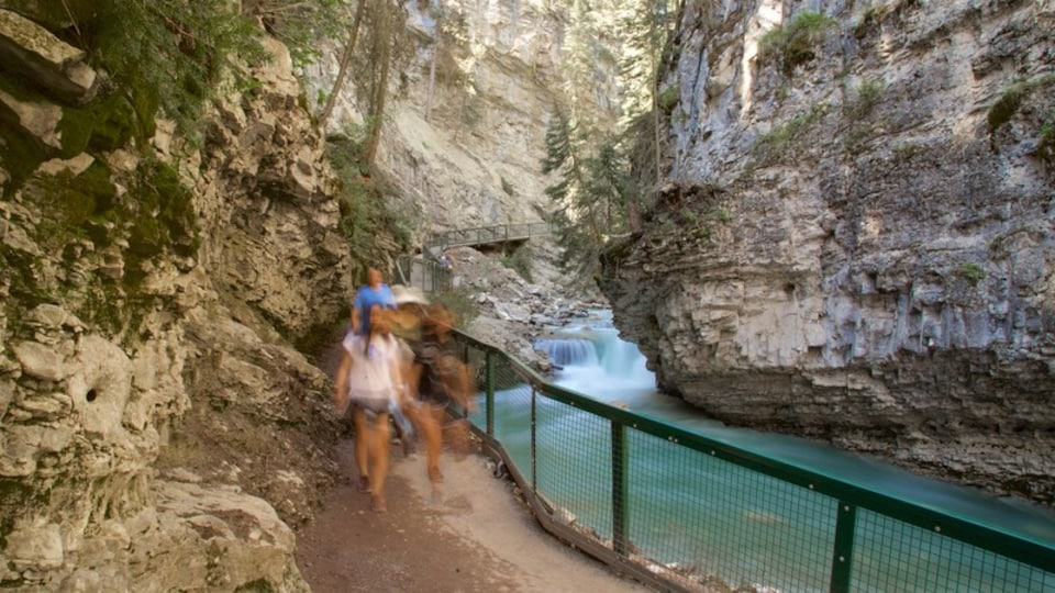 Johnston Canyon showing a river or creek, hiking or walking and a gorge or canyon
