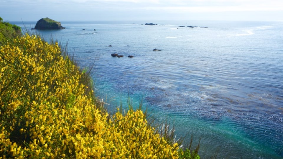 Mendocino featuring general coastal views and wildflowers