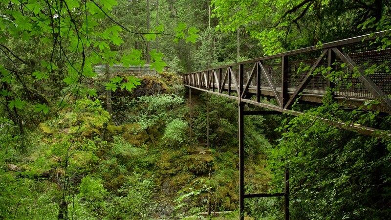 Parc provincial Englishman River Falls