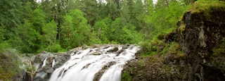 Englishman River Falls Provincial Park featuring forests and a waterfall