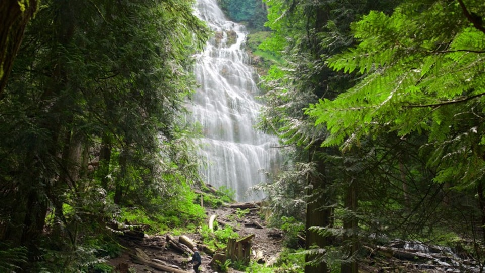 Bridal Veil Falls showing a waterfall and forest scenes