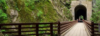 Vancouver Coast which includes a bridge and forests as well as a small group of people