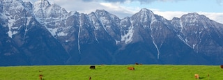 Kootenay Rockies showing land animals, tranquil scenes and mountains