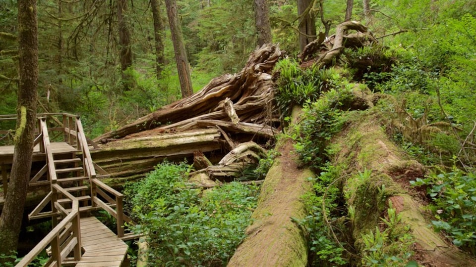 Rainforest Trail which includes forest scenes