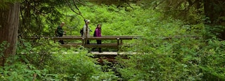 Rainforest Trail which includes forest scenes and a bridge as well as a small group of people