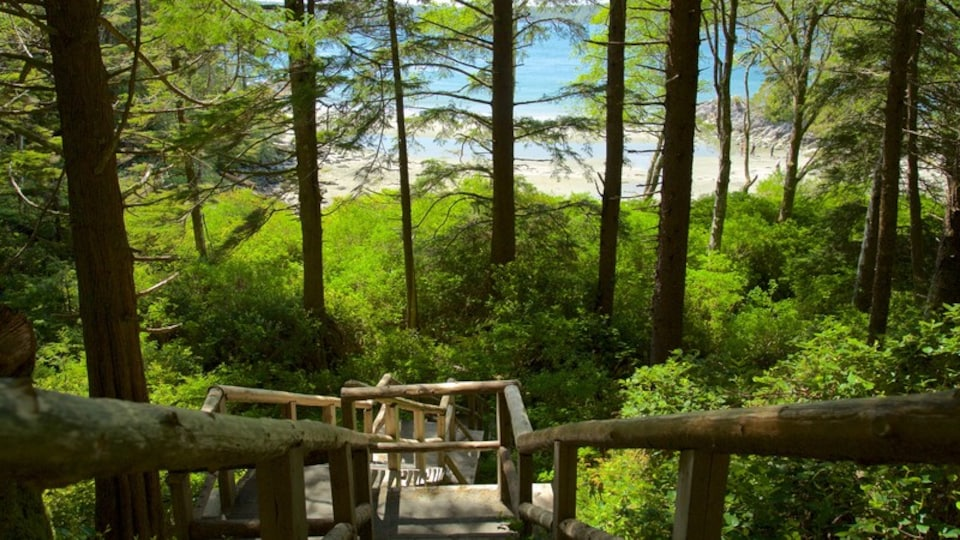 Tonquin Park which includes general coastal views and forests