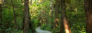 Wild Pacific Trail featuring forest scenes
