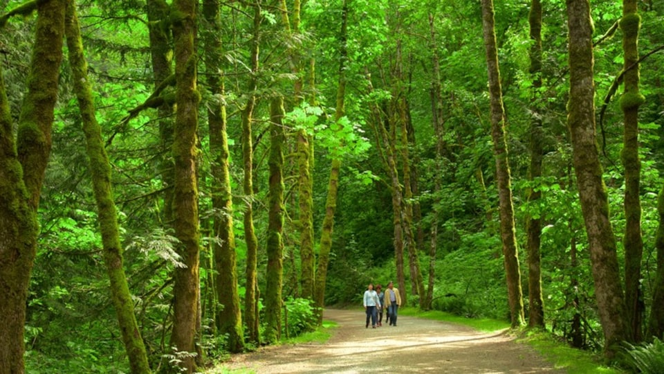 Vancouver Coast featuring forests as well as a small group of people