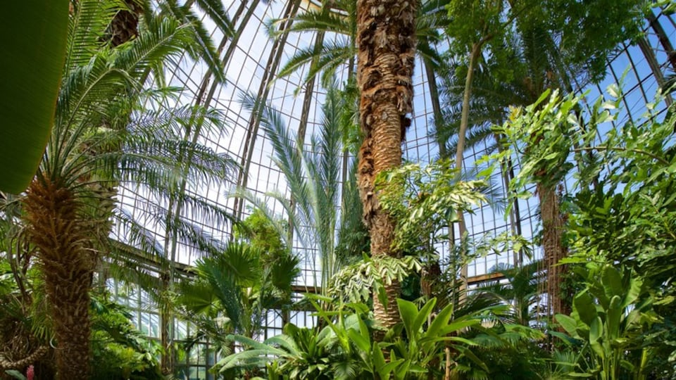 Anna Scripps Whitcomb Conservatory