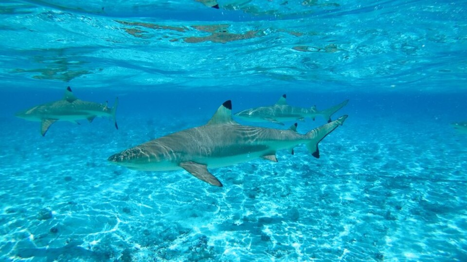 Bora Bora showing marine life