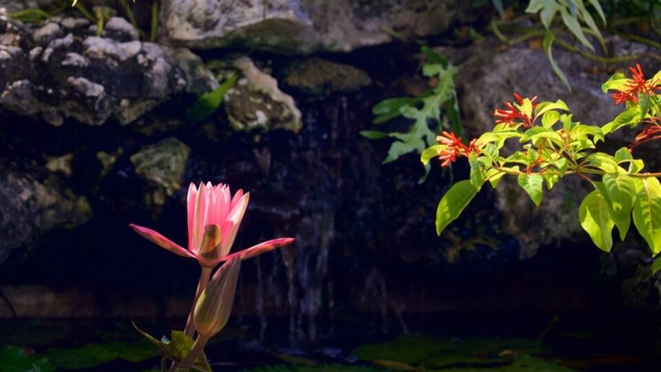 Bora Bora which includes wildflowers