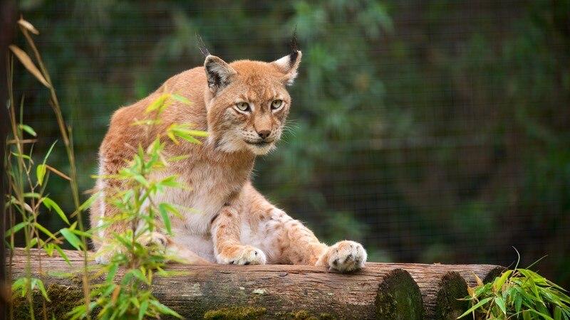 Lagos Zoo