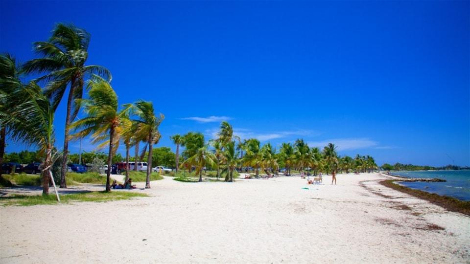 Virginia Key Beach Park which includes a beach, tropical scenes and general coastal views