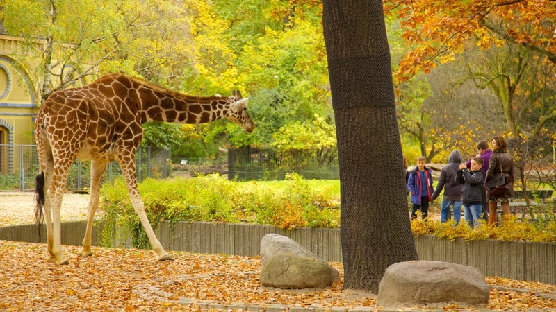 Berlin Zoo showing fall colors, a park and zoo animals