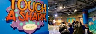 Adventure Aquarium which includes signage, marine life and interior views