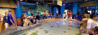 Adventure Aquarium which includes marine life and interior views as well as children