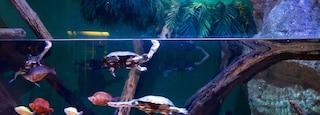 Adventure Aquarium which includes marine life and interior views
