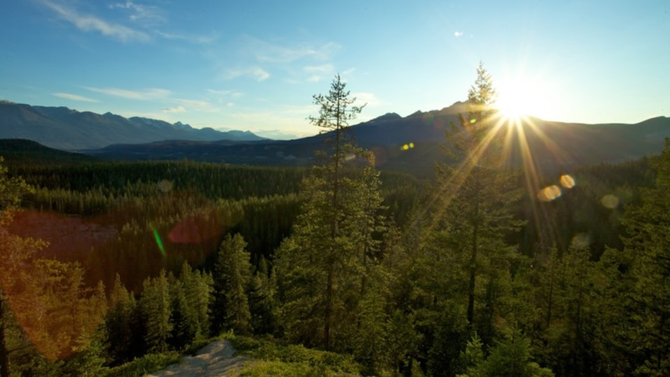 Jasper National Park featuring a garden, landscape views and forest scenes