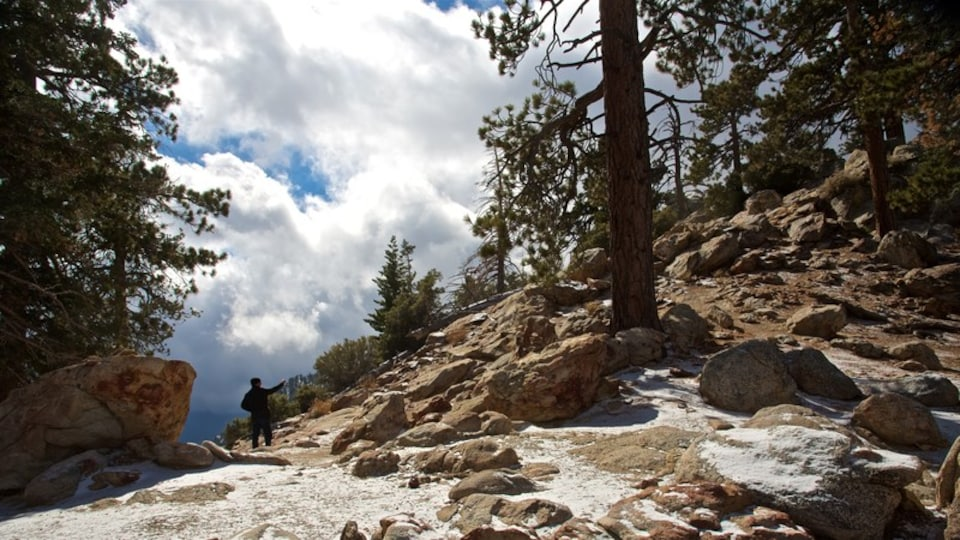 Mount San Jacinto State Park which includes tranquil scenes and mountains as well as an individual male