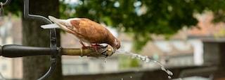 Lindenhof featuring bird life and a fountain