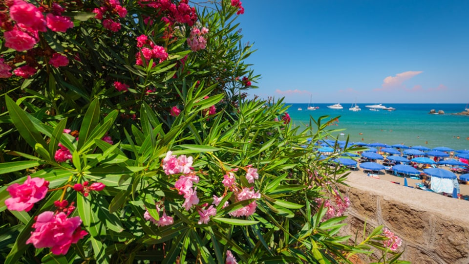 Bay of San Montano which includes wildflowers, general coastal views and a beach