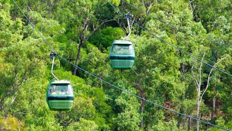 스카이레일 열대림 케이블카