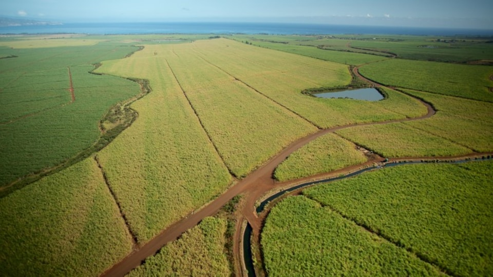 Maui Island showing farmland, landscape views and tranquil scenes