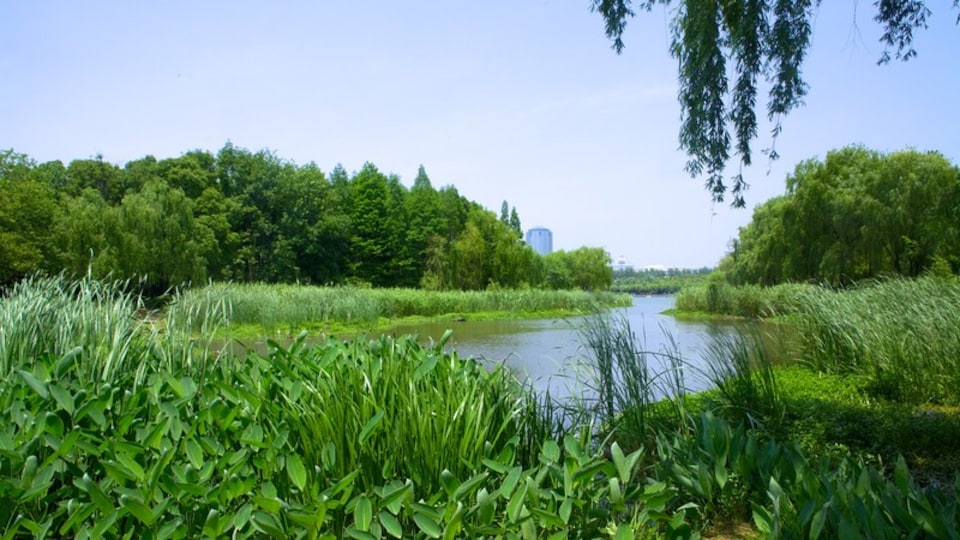 Century Park showing a park and a river or creek