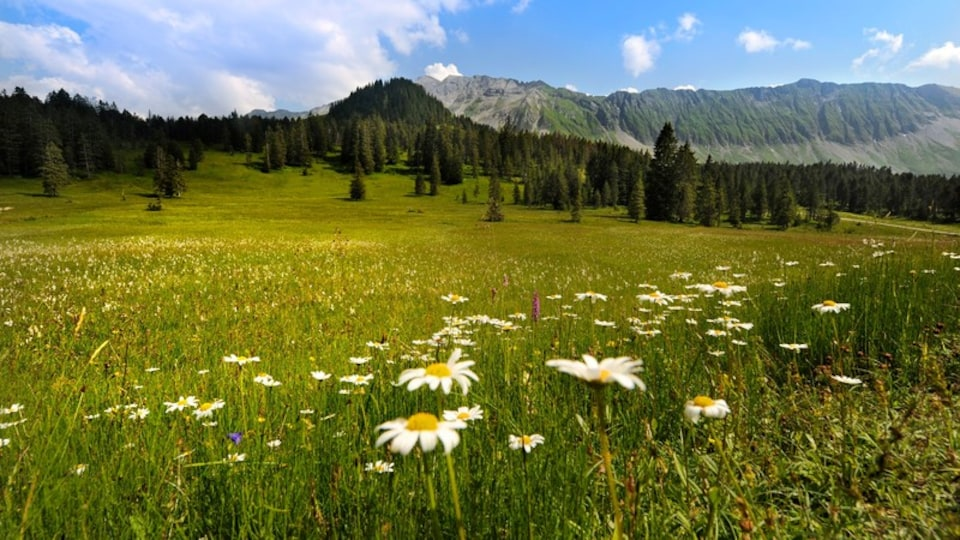 Lucerne featuring forest scenes, wildflowers and tranquil scenes
