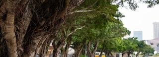 Avenida da República featuring a garden and a river or creek