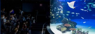 Kanto which includes interior views and marine life
