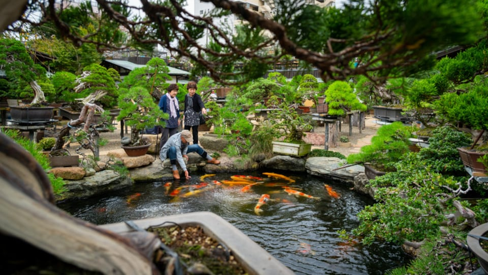 Kanto showing marine life, a garden and a pond
