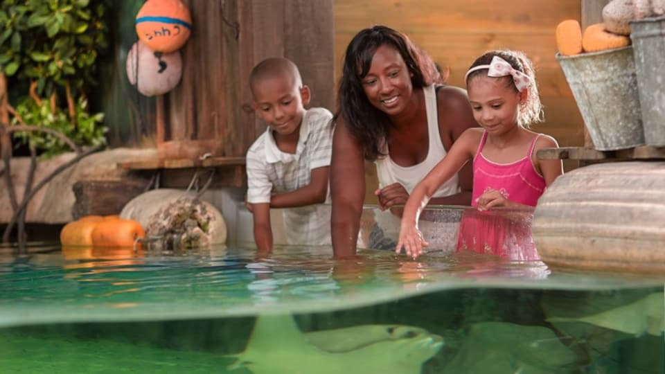 Fort Wayne which includes marine life as well as a family