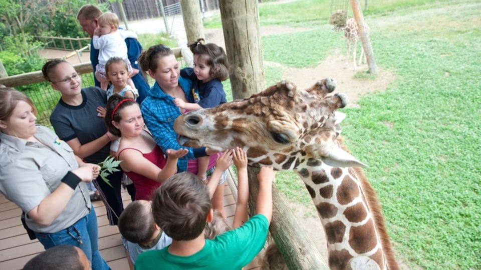 Fort Wayne featuring cuddly or friendly animals, land animals and zoo animals