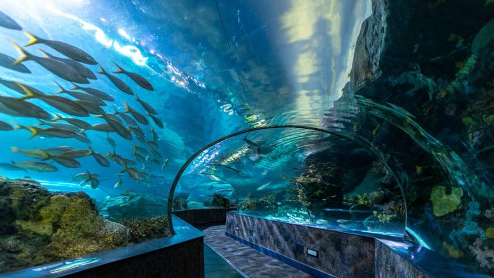 Ripley\'s Aquarium of the Smokies featuring interior views and marine life
