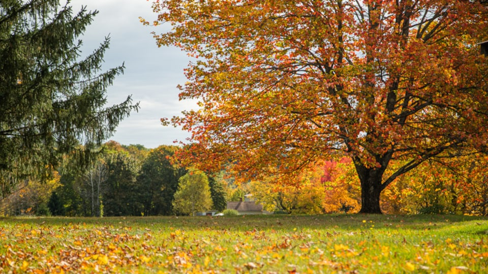 Windham which includes a garden and autumn leaves