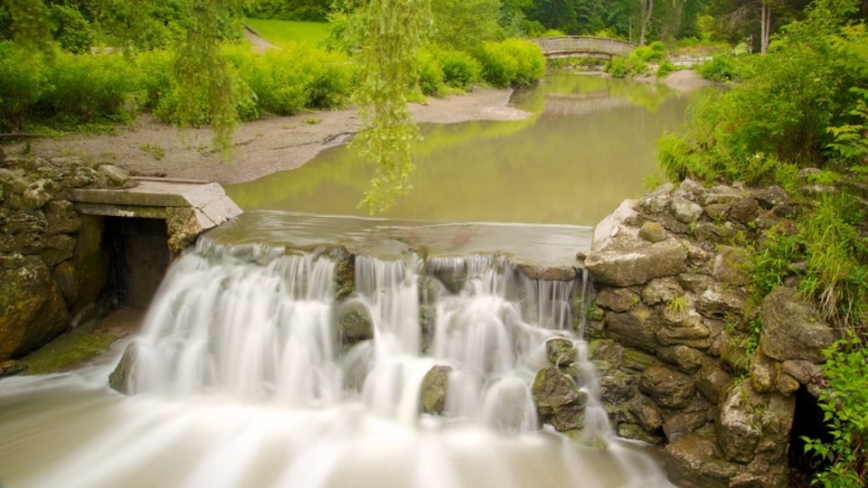 Edward Gardens which includes a waterfall, a garden and a river or creek
