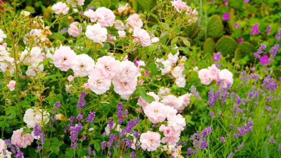 Toronto Botanical Garden showing flowers, a garden and wildflowers