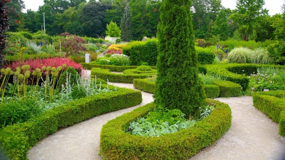 Toronto Botanical Garden showing a garden