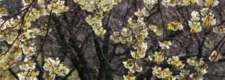 Sakura no Sato which includes wildflowers