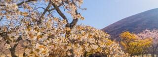 Sakura no Sato featuring wildflowers and a park