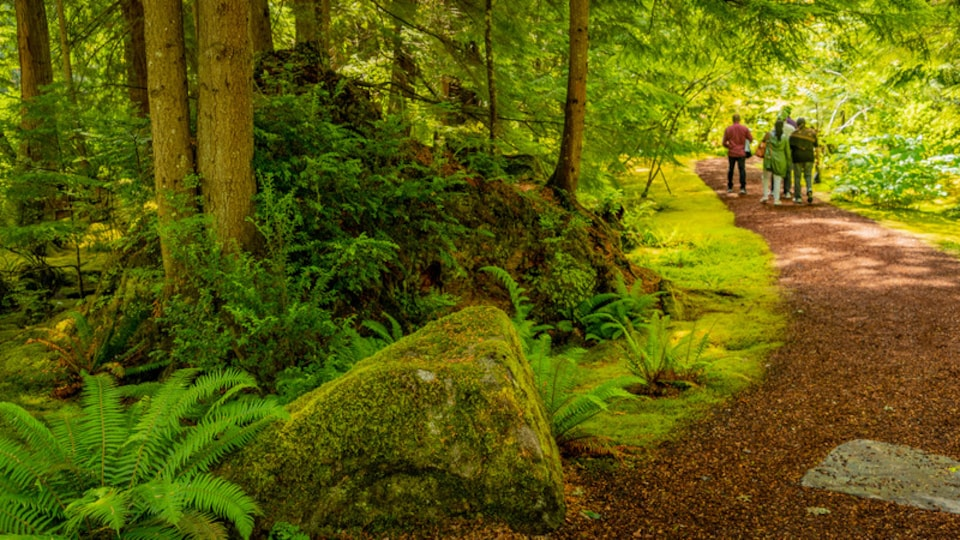Bloedel Reserve which includes forest scenes and hiking or walking as well as a small group of people
