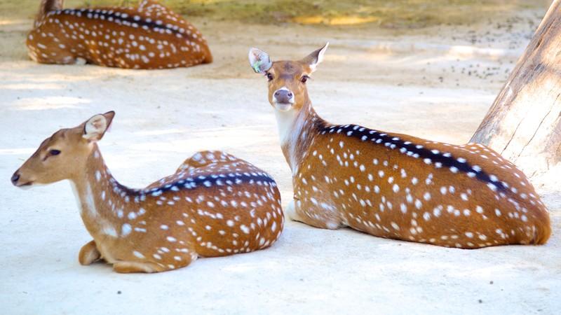 Lisbon Zoo (Jardim Zoologico)