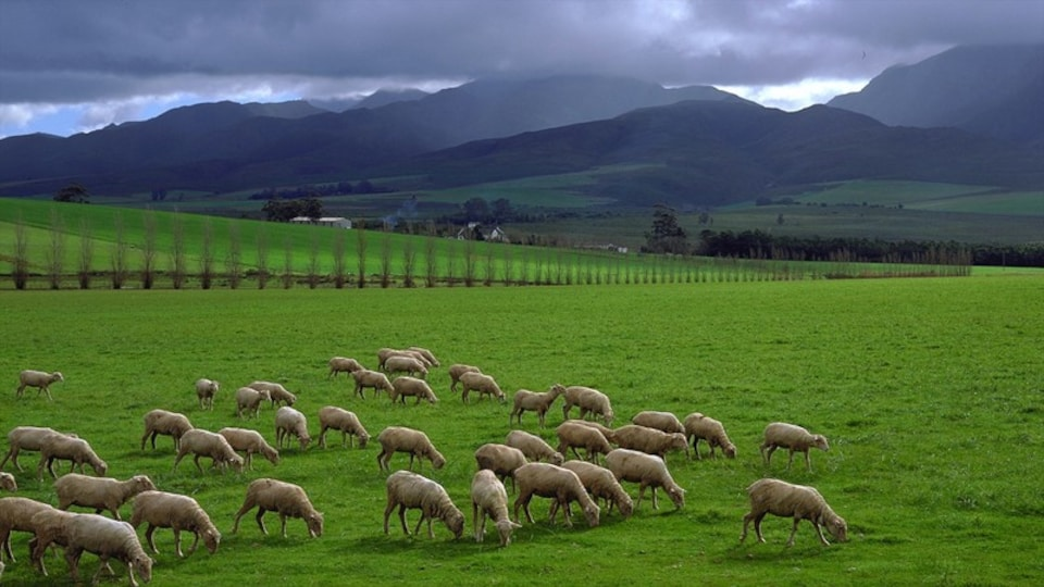 Swellendam showing landscape views, animals and mountains