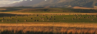Swellendam which includes animals, fall colors and landscape views